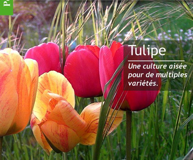 Magazine Petit Jardin N°101 - Avril 2015 - Jardinage, plantes et fleurs