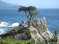 Cruise along California's spectacular coastline on a relaxing day trip from San Francisco. You'll follow Highway 1 to the beautiful Monterey Peninsula and visit Steinbeck's Cannery Row. Finish your day with a stop at the coastal town of Carmel by the Sea, before returning to San Francisco via famous Silicon Valley. www.partner.viator.com/en/11907/tours/San-Francisco/Monterey-Carmel-and-The-17-Mile-Drive-Day-Trip/d651-2660SFOMON