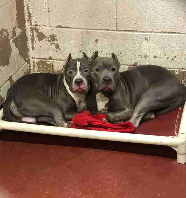 Shelter Overflowing With Dogs Has No Space Left Animals Animal