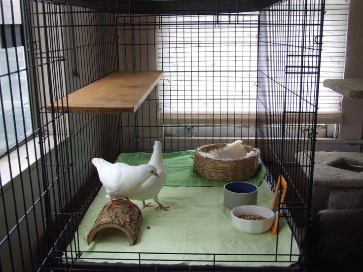indoor pigeon cage