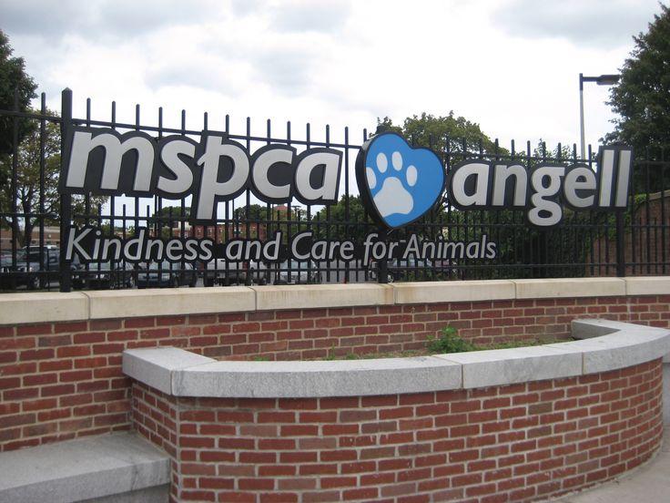 12++ Pleasure island animal hospital images