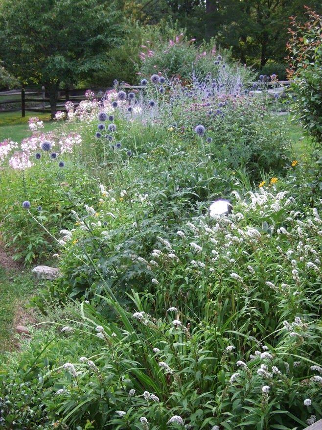 thistle - bee balm - russian sage Westport Historical Society Hidden Garden Tour  Greens Farms Rd Westport CT Caldwell Banker