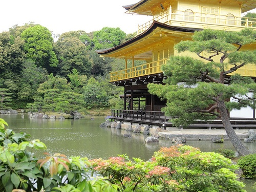Golden Temple - Kyoto