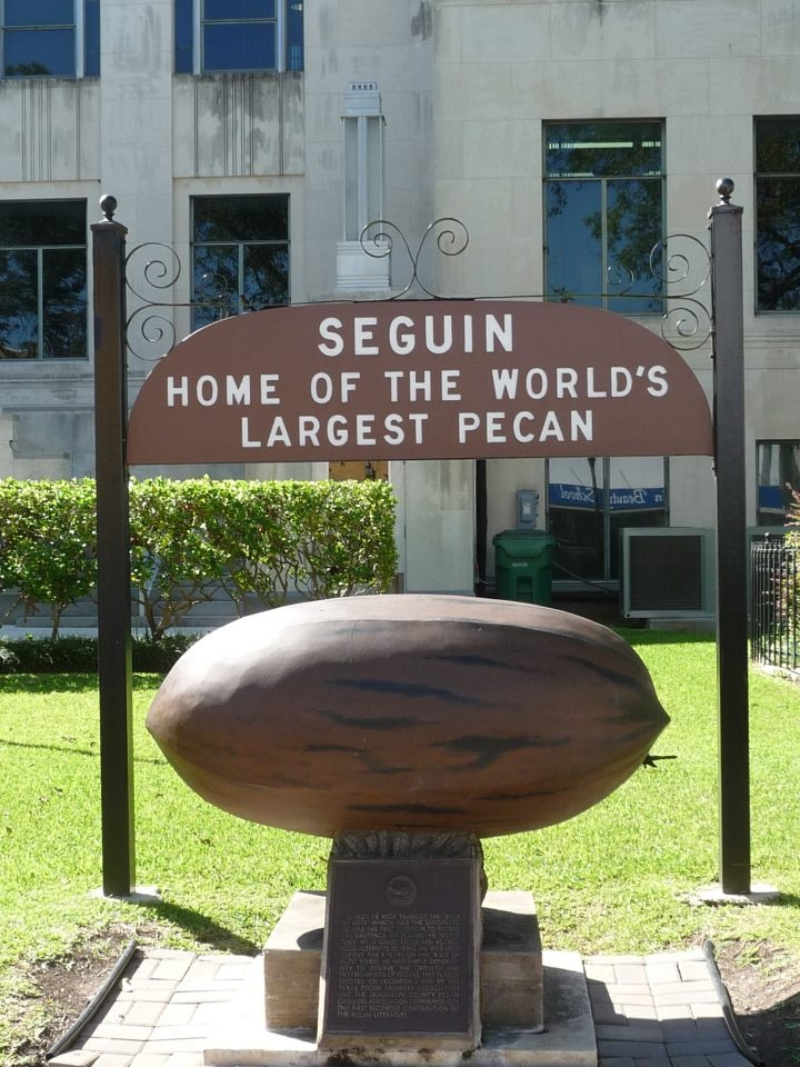 Seguin, Tx., just down the road.Biggest Pecans, Largest Puh Cahn, Largest Pecans, Oldest Sons, Texas, Pecans Pies, Pecan Pies, 2Nd Largest, Seguin Pecans