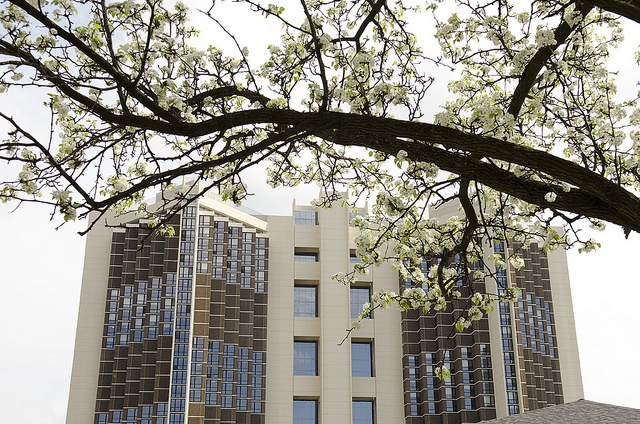 Illinois State University Campus by Illinois State University - Watterson Towers: Collegee, 3 Months, Fantastic Photo, Dorm Crafts, Biggest Dorm, Dorm Building, Illinois States Universe, Colleges Bound, Colleges Countdown