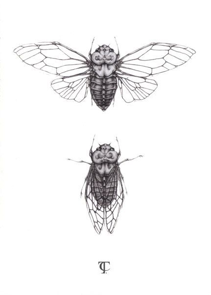 Cicada Illustration - A5 fine art print