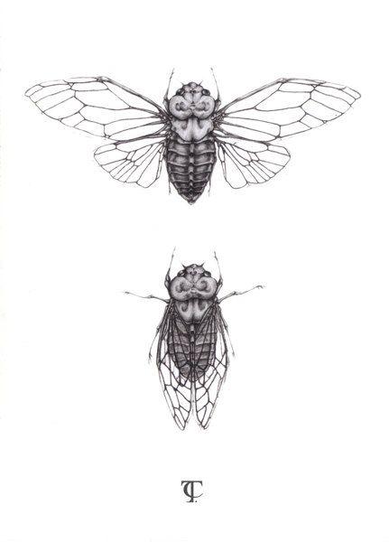 Cicada Illustration - A5 fine art print