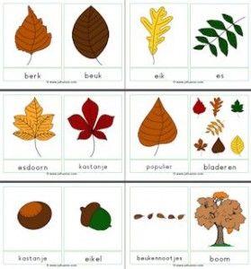 Woordkaarten bladeren, boomvruchten