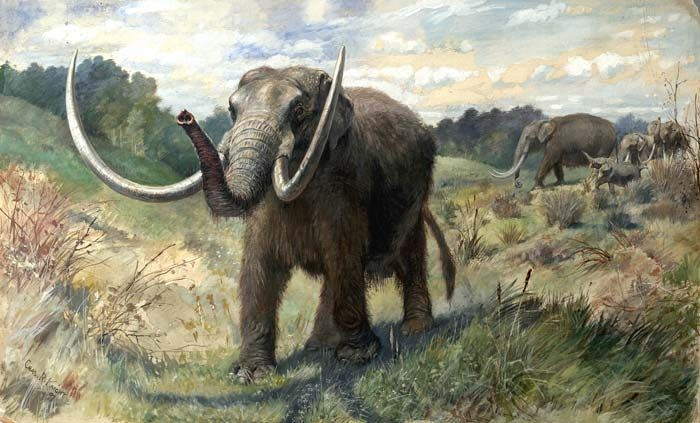 RECONSTRUCTION MASTODON