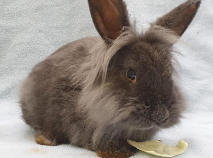 Shreddie In 2020 Rehome Dog Female Rabbit Animals
