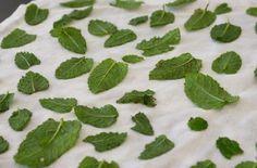 Conserver, sécher, congeler et utiliser la menthe récoltée au potager