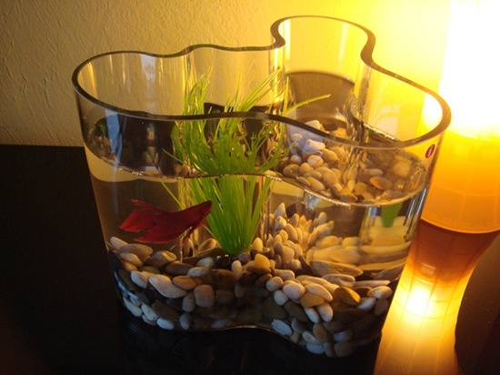 Another fun way to use the unique Aalto Vase by Iittala.  http://www.atkinsonsofvancouver.com/iittala-aalto-vase.html