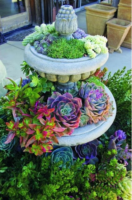 The French Tangerine: ~ succulents in bird bath