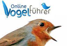 Mit ein paar Klicks 225 heimische Vogelarten bestimmen / Auch für Smartphones