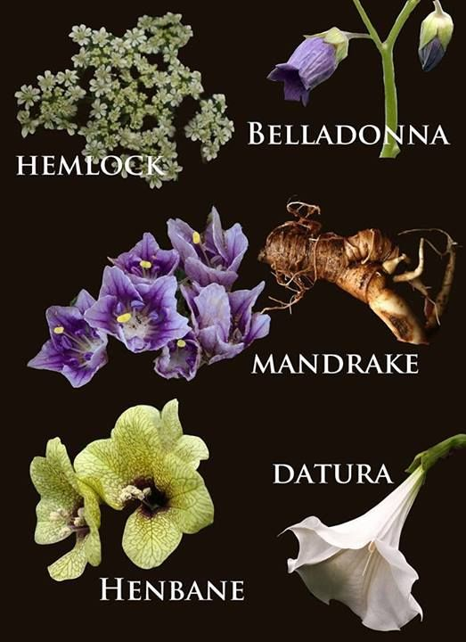 "Poisonous plant and classic Witch garden flowers. All of these plant while lovely are indeed toxic. For more information read my book ""Garden Witches Herbal"". There you will find a chapter devoted to Gothic Witch Garden Plants. -Ellen Dugan"