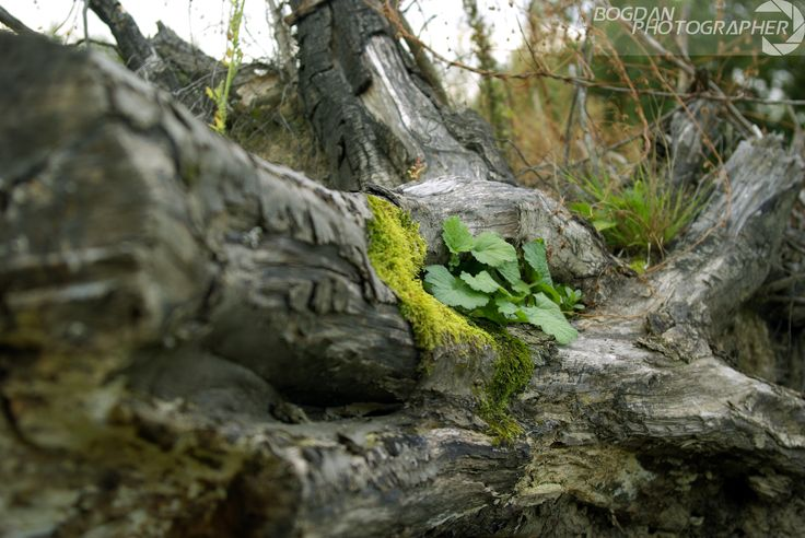 Rotten log with moss and leaves