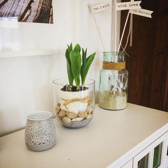 die besten 25 tulpenzwiebeln ideen auf pinterest rock yard fr hlingszwiebeln wachsen und. Black Bedroom Furniture Sets. Home Design Ideas