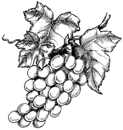 To draw grapes, start by examining the grapes illustration before proceeding to the first step.