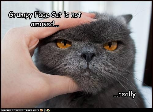 Grumpy Face Cat is not amused... | Cats, Faces and Grumpy face