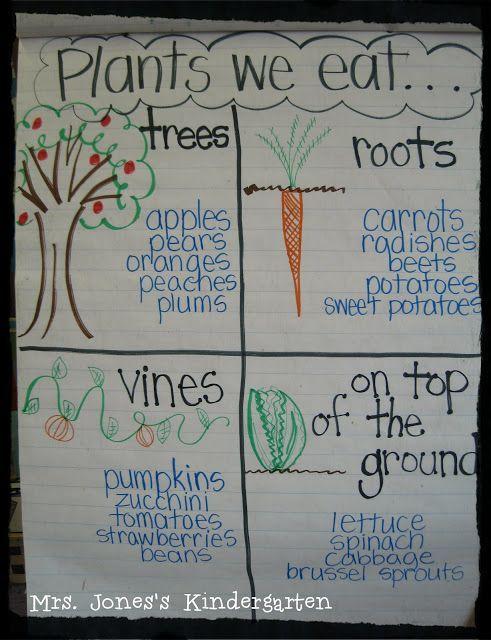 Zaden groeien uit tot verschillende planten. Waar komen de dingen die wij eten vandaan? Een appel groeit aan een boom, maar een aardbei dan? Een aardappel groeit onder de grond, een wortel ook.