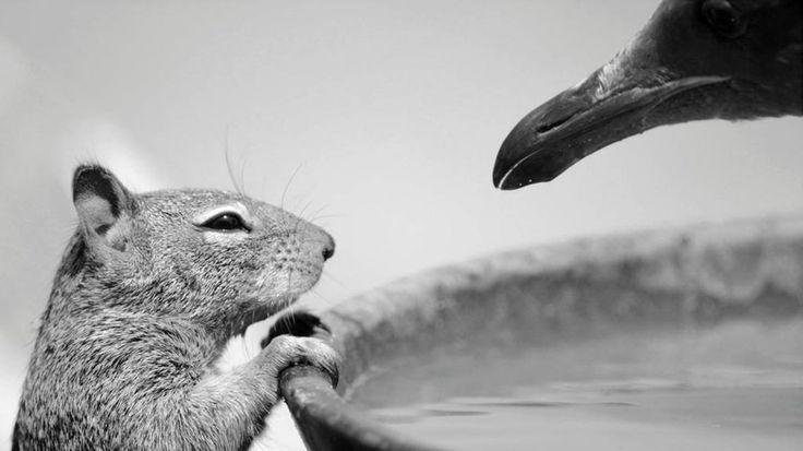 Imagen ganadora de la categoría Fotógrafo menor de 10 años.Carlos descansaba junto a su familia en la playa de Morro Bay, cuando fue testigo de una fascinante interacción entre dos especies diferentes: una ardilla y una gaviota