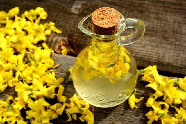 Zioła, Kwiaty i ich zastosowanie: Forsycja bogate źródło rutyny - działanie antyalergiczne i przeciwstarzeniowe.