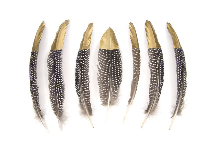 Excited to share the latest addition to my #etsy shop: Gold Tipped Large Guinea Fowl Wing Feathers - Black + White Spotted - 15-20cm Long - Great for crafts, jewellery + dream catcher making!