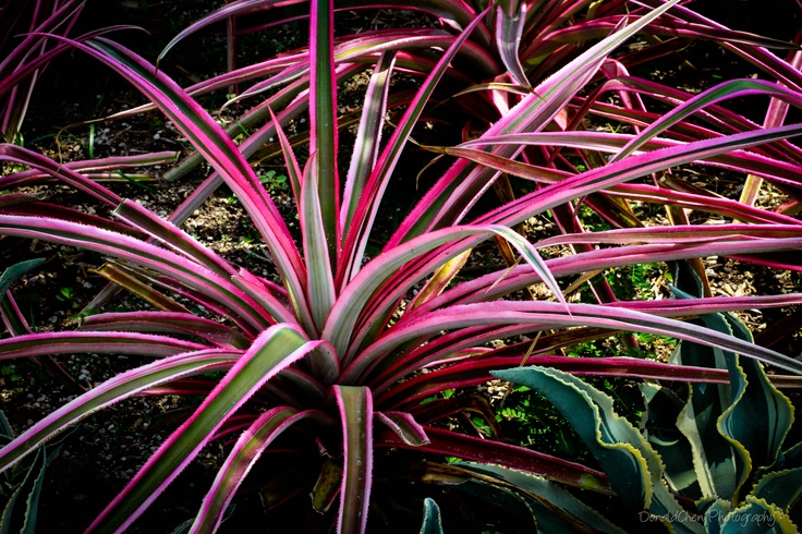 This Plant's Common Name Is Colorama Dracaena Or