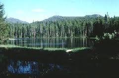 El Bosque Forestal es, a veces, llamado Bosque de Coníferas del Norte o, especialmente en Eurasia nororiental (Siberia), Taiga. Se observan extensiones de ...