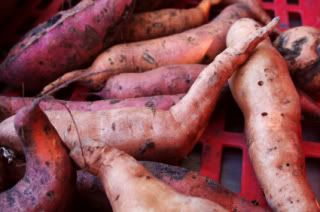 A Visual Guide to Yams and Sweet Potatoes (plus How They Fit Into a Primal Eating Plan)