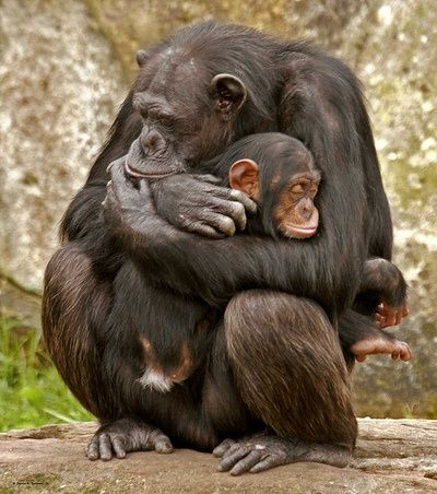 This is where the babies should be..Mom is the best teacher of survival in the wild.