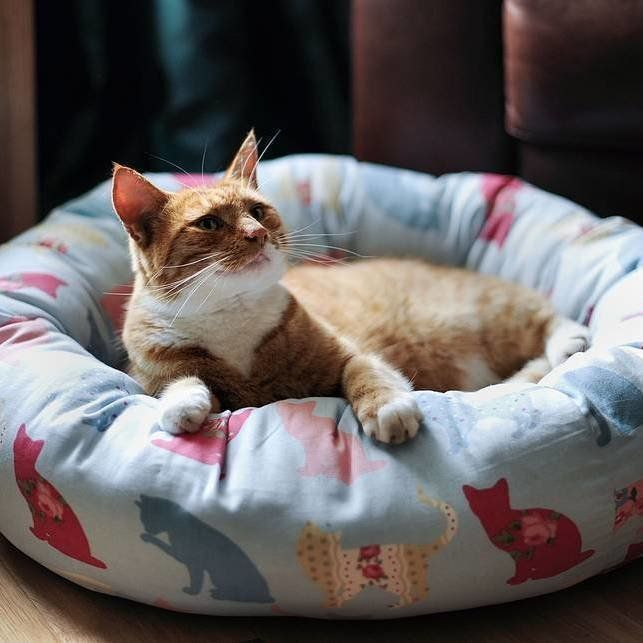 Country Living / Pins and Ribbons / Felix Sky Cat Donut Bed