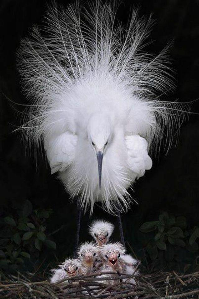 try n'yo manggulo born in the wild resback namin!!!!!!!!!Amazingly beautiful