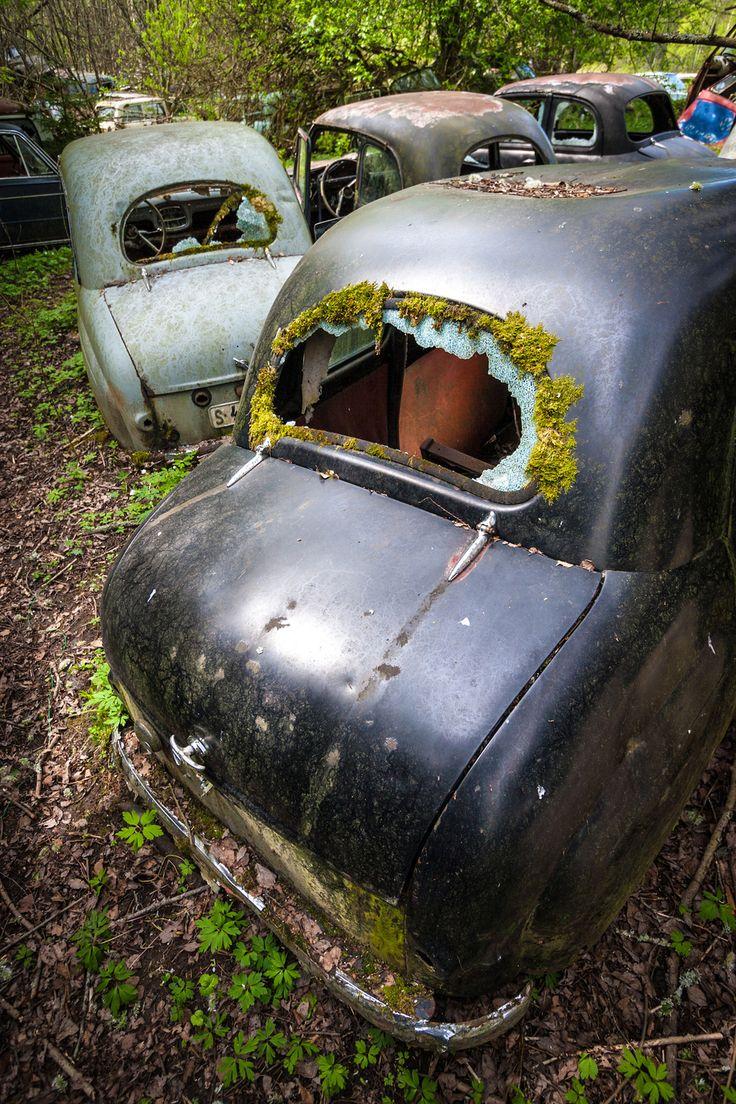 un vieux cimetiere de voitures en suede 15   Un vieux cimetière de voitures en Suède   voiture vintage Suède seconde guerre mondiale photo m...