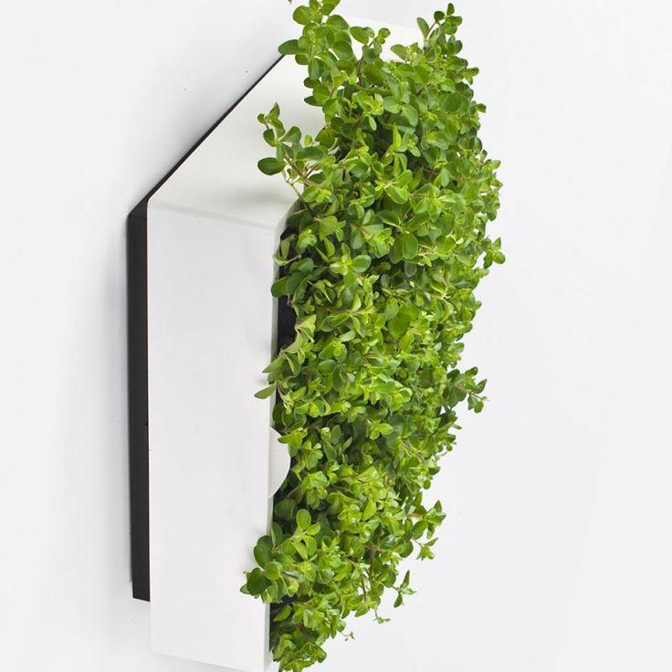 Beautiful Vertical garden Von Jiri Vermeulen entworfener vertikale Pflanztopf Karoo l sst sich problemlos an