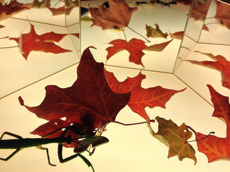 Leaves & Mirror on Light Table