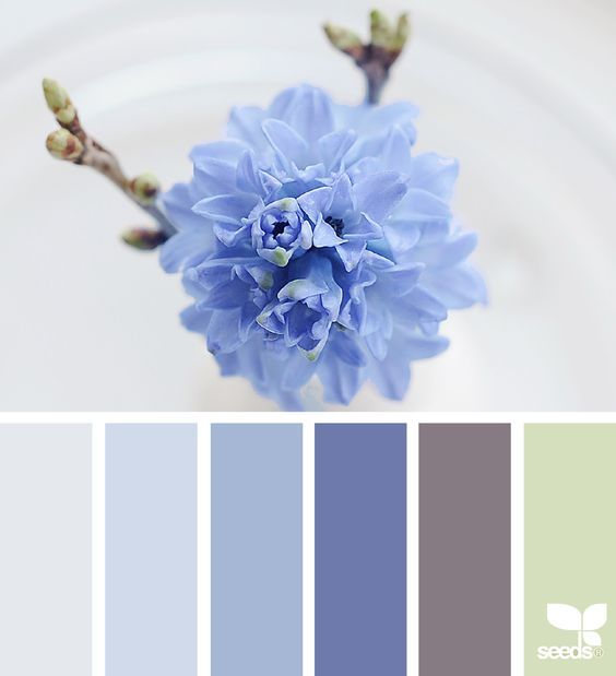 Last Two Colors For Kitchen/family Room