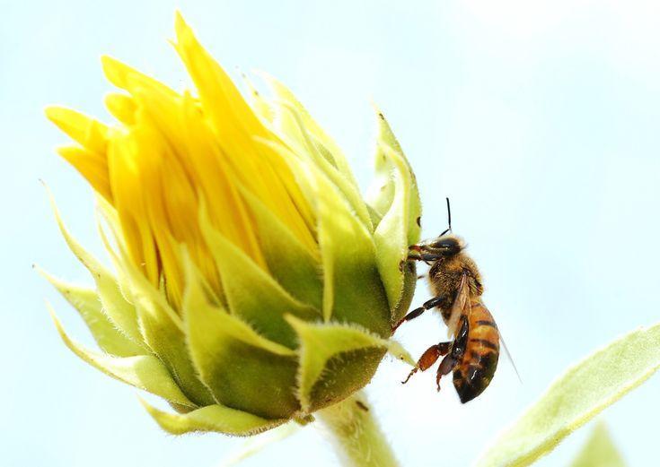 An Iowa Honeybee Yard Was - https://modernfarmer.com/2018/01/iowa-honeybee-yard/?utm_source=PN&utm_medium=Pinterest&utm_campaign=SNAP%2Bfrom%2BModern+Farmer