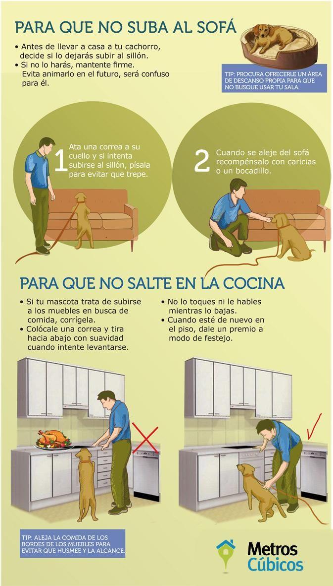 Trucos para educar a tu mascota