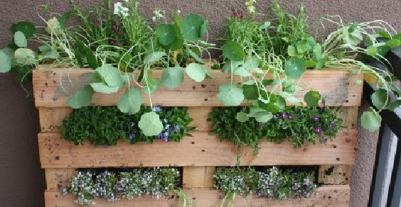 Orti urbani: come costruire un giardino verticale fai-da-te con il pallet