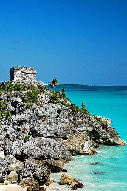 Tulum, Mexico.-- iguanas everywhere! The view from Dreams resort looking at this is beautiful.