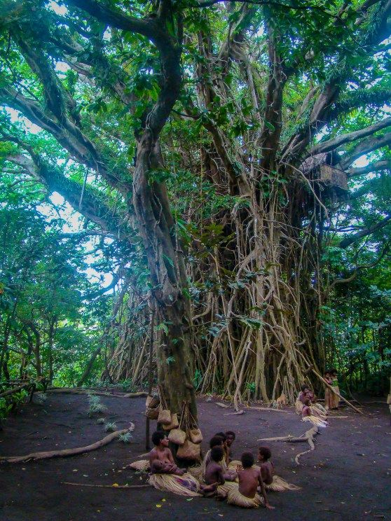 Women Sit in Front of a Great Banyan Tree with a Tree House, Tanna Island, Vanuatu