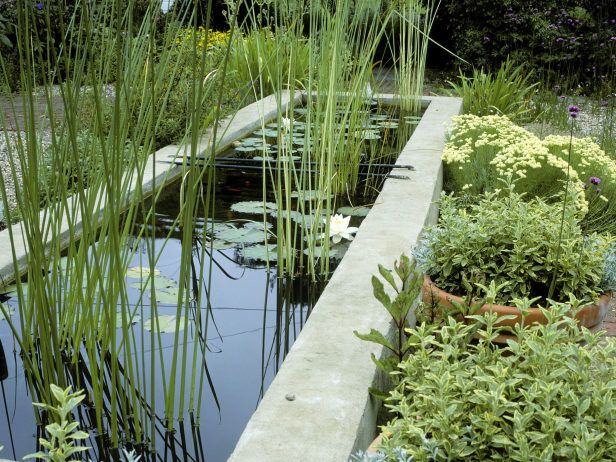 25 best ideas about raised pond on pinterest koi pond for Types of pond design