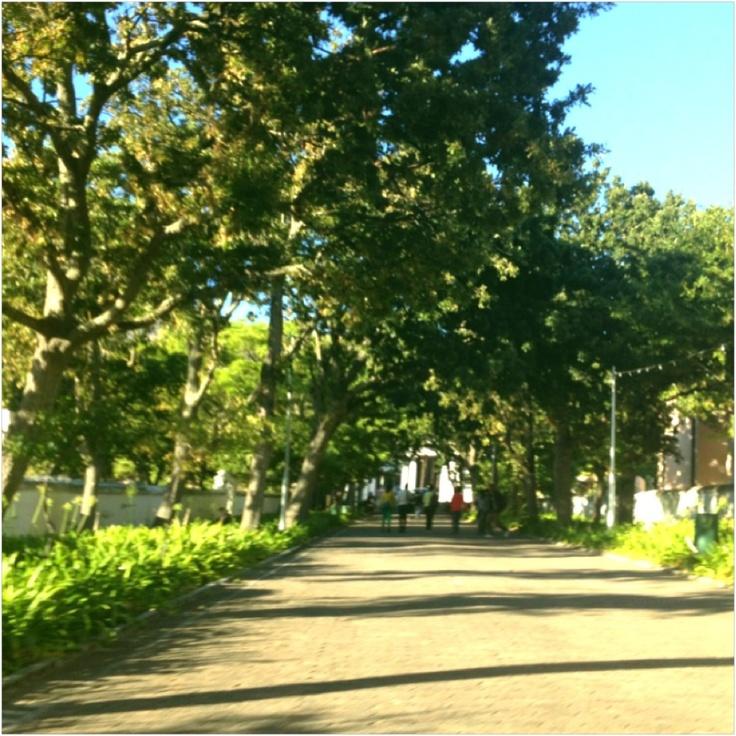 Company Gardens - Cape Town