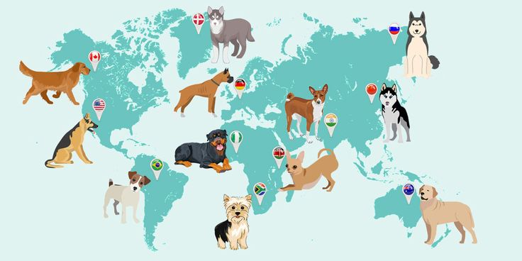 100+ #DogBreeds #Images, Information under one place.