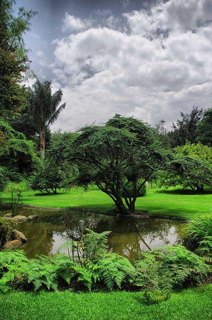 Jardin Botánico José Celestino Mutis - Bogotá