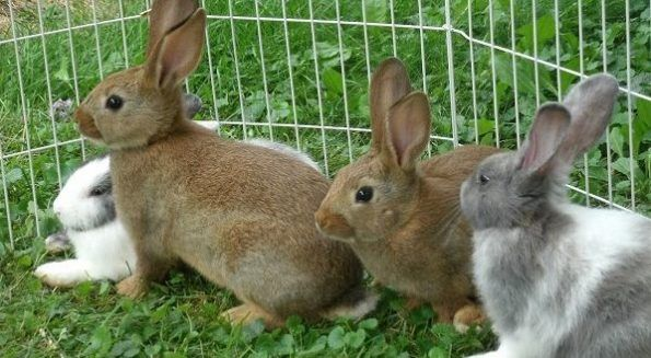 تفسير رؤية الحبيب في المنام للعزباء والمتزوجة لابن سيرين موقع مصري Cool Pets Pets Rabbit