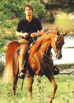 Arabian stallion Tammen (Patrick Swayze's horse)