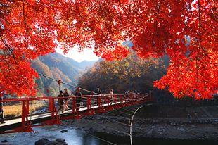 絶景! 優美に色づく紅葉の香嵐渓で、秋の薫りに包まれる 観光・旅行情報サイト【ぐるたび】