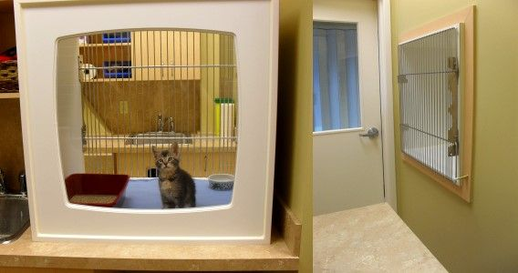 73 Best Images About Building A Vet Practice Isolation